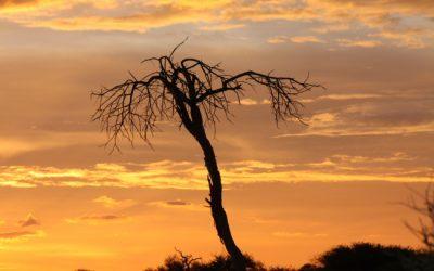Swartpan – Botswana – December 2013
