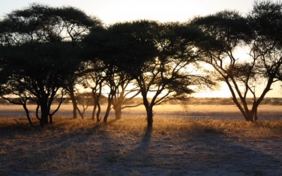 CENTRAL KALAHARI GAME RESERVE (CKGR) – BOTSWANA