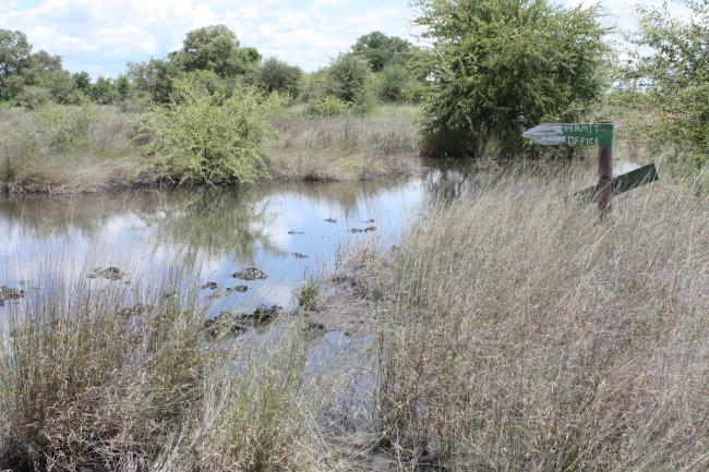 Die pad na die besprekings kantoor van die Nkasa Rupara National Park (Mamili)
