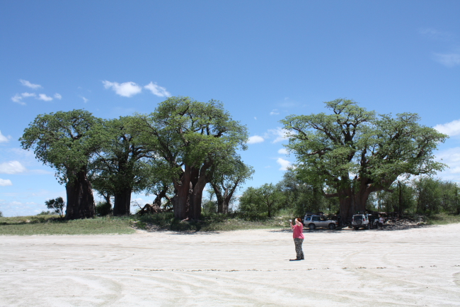 Baines se Baobabs