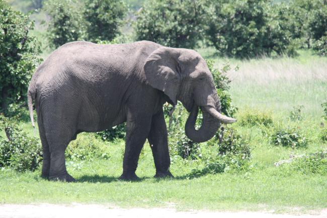 Elepant at Shumba Camp
