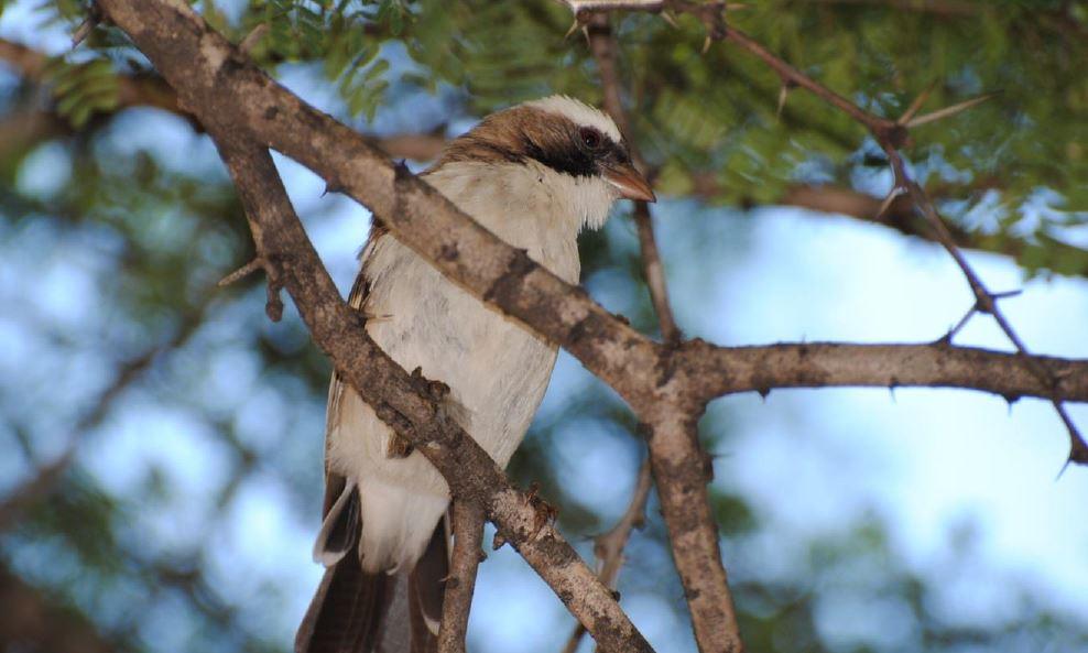 Botswana