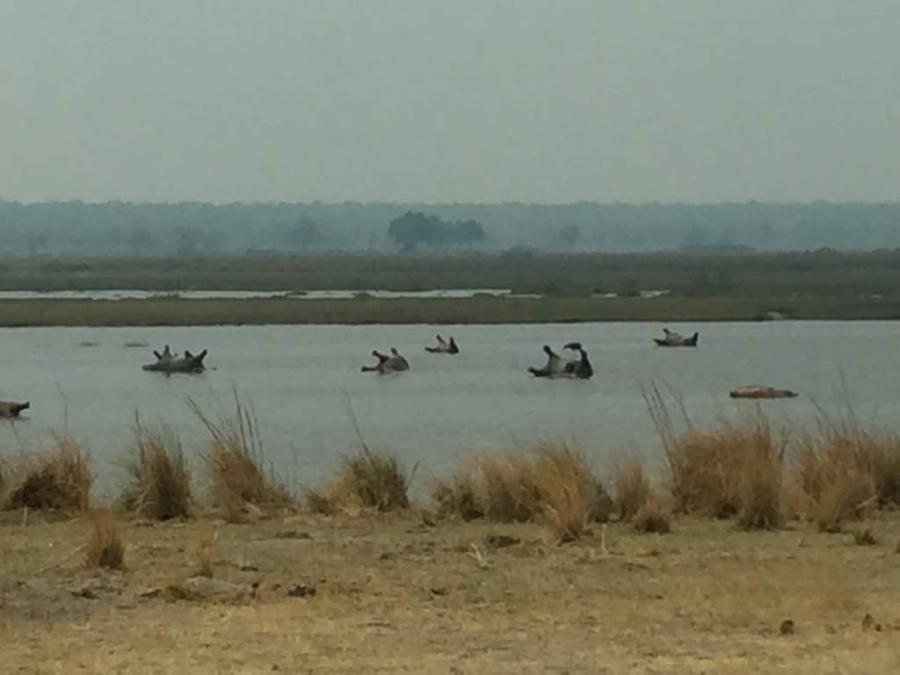Anthrax kills 109 hippos in Bwabwata